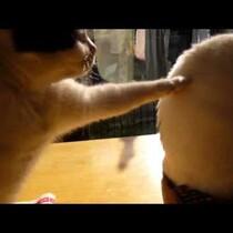 Cat loses patience!