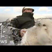 Farmer And His Dog Rescue Sheep Buried Alive Under Snow For 3 Days.