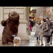Kay Rich: Hungry Bear Loose In NYC?