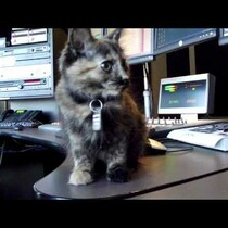 Adopt Lyndzey From the Animal Friends Humane Society