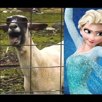 Disney's FROZEN, the GOAT edition!