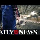 AWFUL: Poultry processing workers wear diapers to work because they can't get bathroom breaks