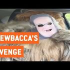 Chewbacca Gets His Revenge