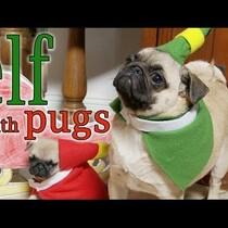WATCH: Pugs do 'Elf'
