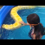 Kids Swimming With a Python in a Pool