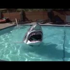 Look at that shark in the pool!