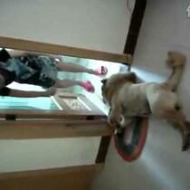WATCH doggy doesn't want a bath