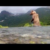 GoPro: Grizzly Eats My GoPro