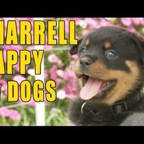 Pharrell HAPPY - The PUPPY version!