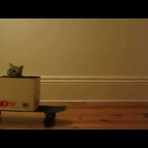 WATCH: 'Cat Boarding' the next viral sensation?