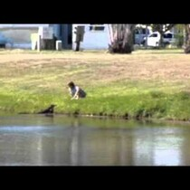 Woman Hand Feeds A Gator...Is She Crazy?!?!