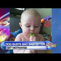 Dog Saved Baby From An Abusive Babysitter