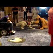 WATCH: A Service Dog Meets Pluto aboard the Disney Fantasy