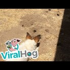 Watch this dog get punked by a gopher!