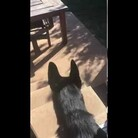 WATCH: Dog Plays Fetch And Brings Back Something You Wouldn't Expect