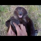 Man and Grizzly Bear - Adventures with Bella