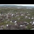 More Than 300 Deer Killed By Single Lightning Strike