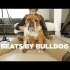 Watch Derick Watts Turn His Bulldog Into A Canine Drum Machine