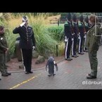 Sir Nils Olav The Penguin Promoted To Brigadier