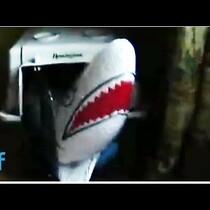Dachshund vs Inflatable Shark