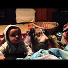 VIDEO!  Child Is Quiet, But The Dog Said