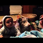 "Parents Try To Teach Baby To Say ""Mama"" But The Dog Say It Instead"