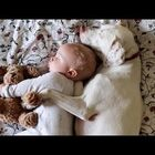 Rescue Dog Loves His Baby Brother