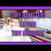 Did You Know That Hamsters Like Burritos?