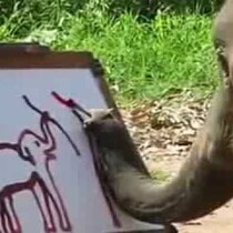 An Elephant And A Paint Brush: Watch this!!!