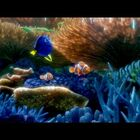 Kay Rich: You've Found the Latest 'Finding Dory' Trailer