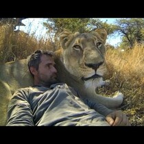 Guy Plays With Lions In The Wild Like They're Housecats