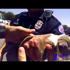 Watch As Police Rescue Puppy From Hot Car