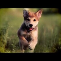Because you just need a puppy break.  I pulled this video up reluctantly as we see a lot of of animal videos everyday.  Glad I did. This one... you will love.