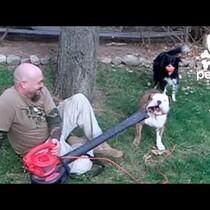 Bulldog Vs. Leaf Blower....Who ya got?!