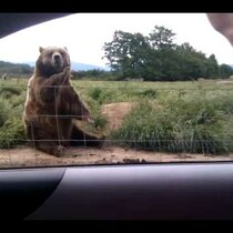 Coffee Break Video-A Very Polite Bear