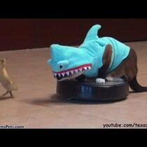 WATCH: Cat in shark costume chases duckling while riding roomba