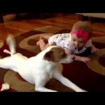 VIDEO:  Dog Teaches Baby To Crawl