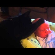 Cat Soothes Crying Baby To Sleep!