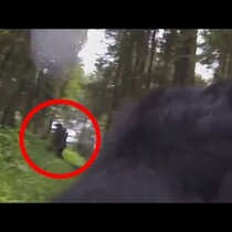 WATCH: Dog with GO PRO sees Big foot