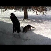 Dog Shows Teenager How Snow Shoveling is Done