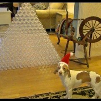 The Happiest Dog In The Worlds Gets 210 Plastic Bottles For Christmas