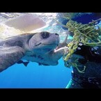 COOL: Sea Turtle Thanks Divers for the Rescue