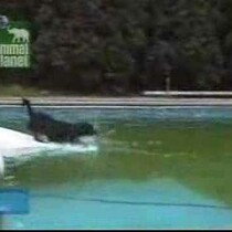 VIDEO:  Clever Dog Get's His Ball!