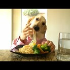 Dog Eats Pasta with Hands (VIDEO)