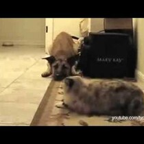 Cat To Dog: