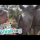 #CUTEANIMALS: Orphan Rhino Giving Kisses