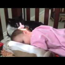 Kitty Gives Its Tiny Human A Bath