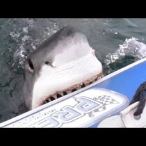 Before You Head Out In The Blow Up Boat....(Cue Jaws Music)