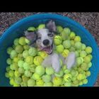 Swimming In A Sea Of Tennis Balls