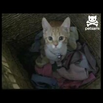 Cat Helps Out With Laundry